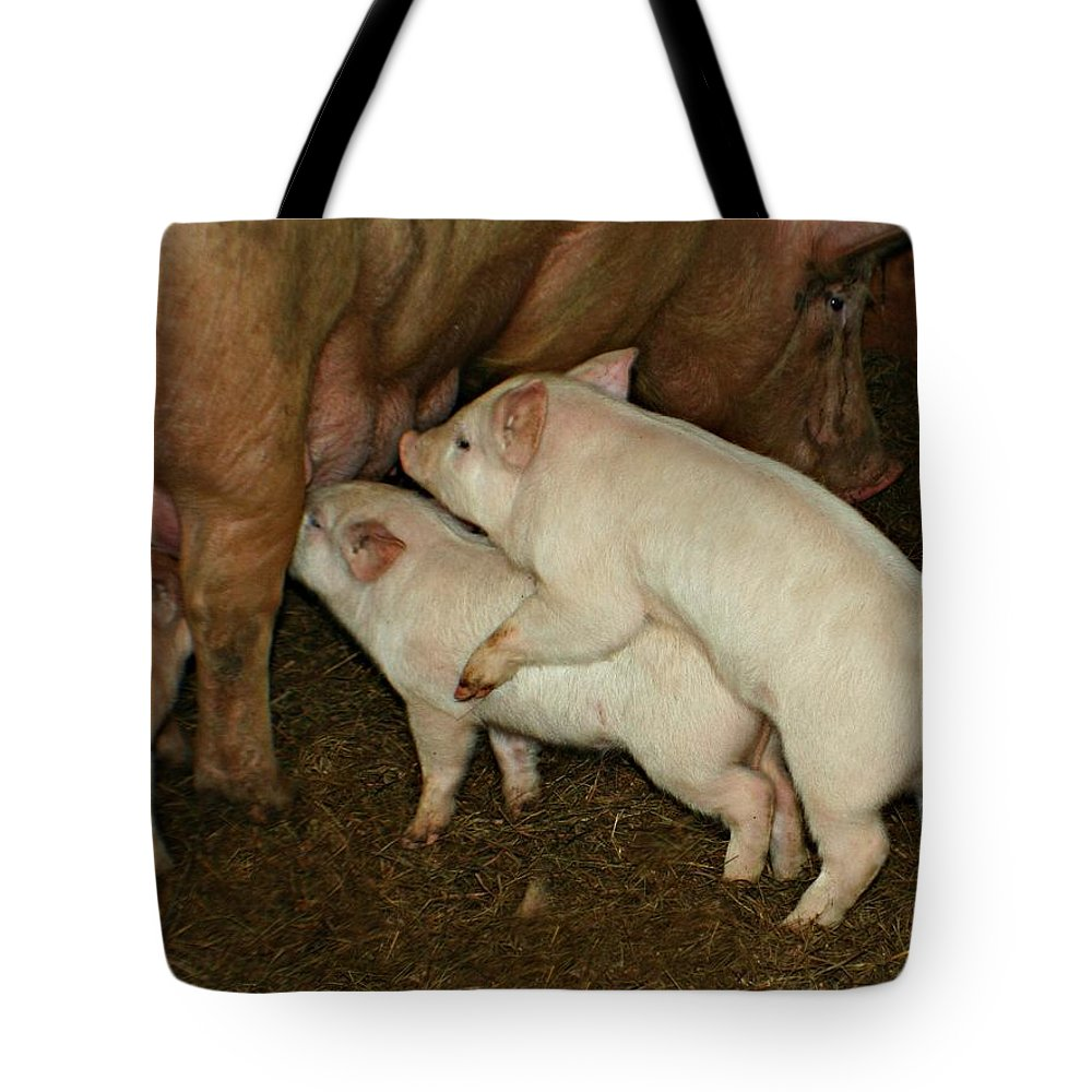 Pig Tote Bag featuring the photograph Piggy Back Brunch by Barbara S Nickerson