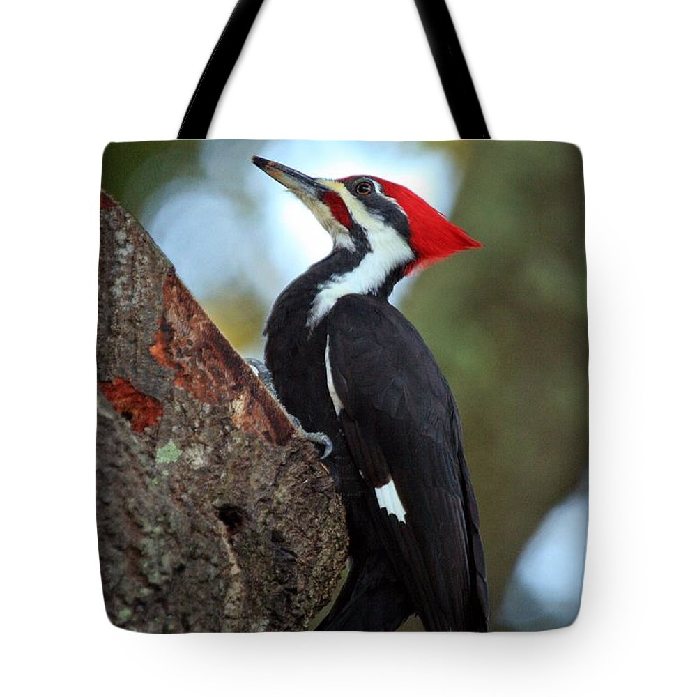 Woodpecker Tote Bag featuring the photograph Pilated Woodpecker by Randy Matthews