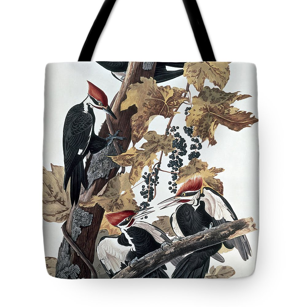 Pileated Woodpeckers By John James Audubon (1785-1851) Tote Bag featuring the painting Pileated Woodpeckers by John James Audubon