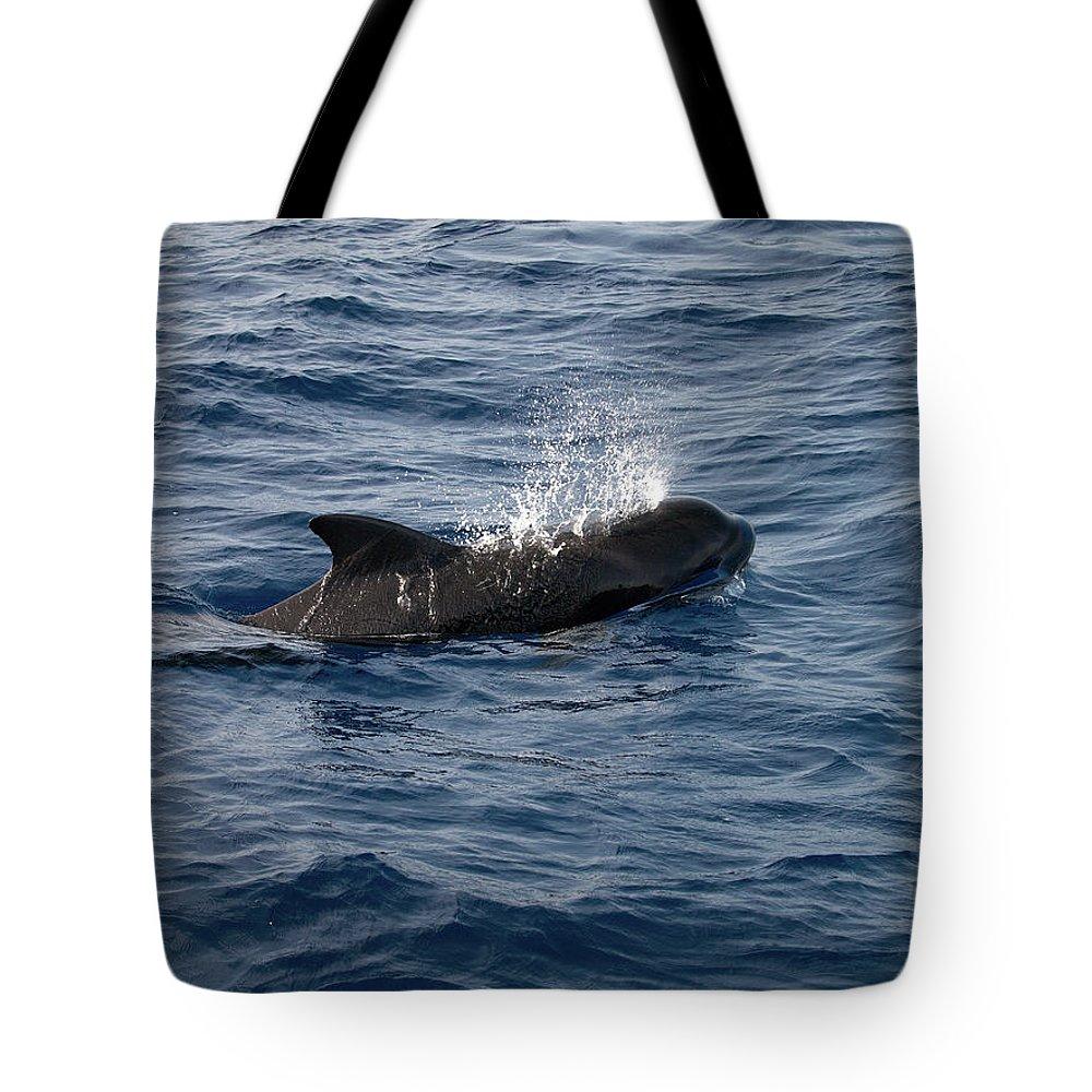 Valasretki Tote Bag featuring the photograph Pilot Whale 6 by Jouko Lehto