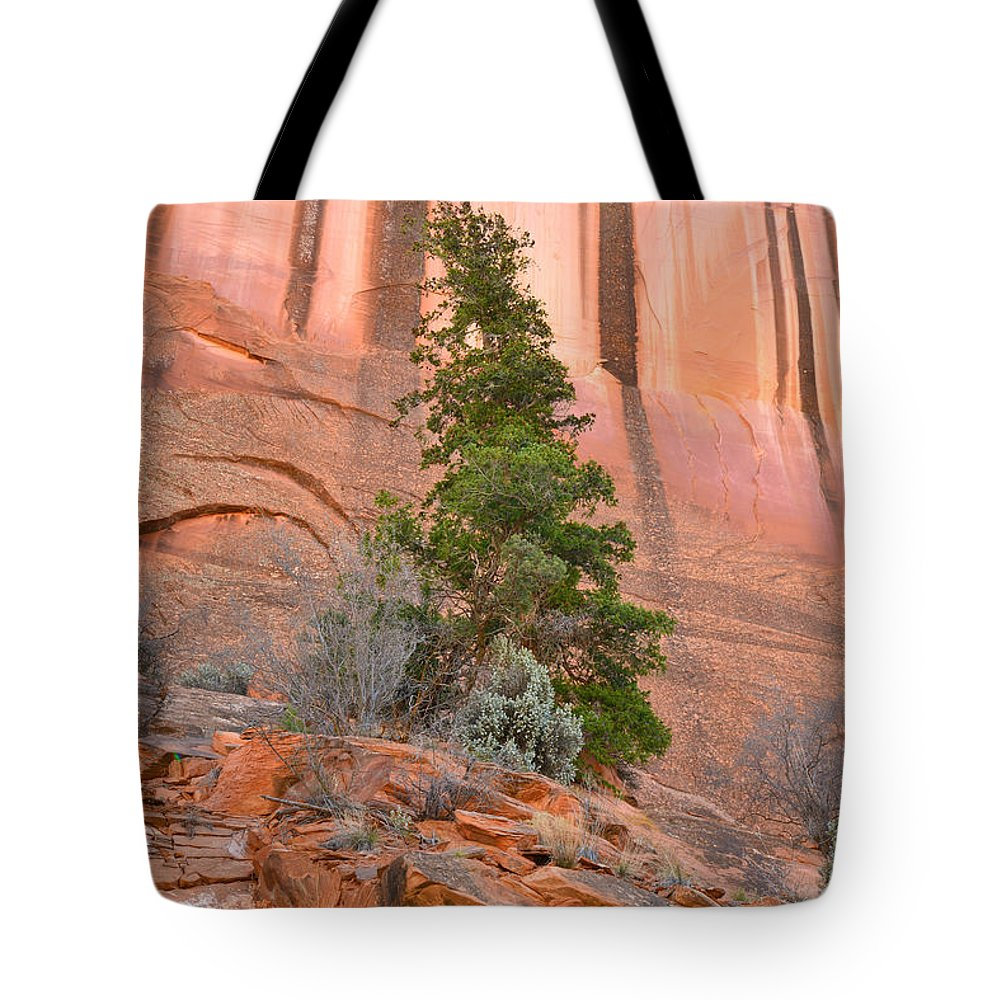 Grand Staircase Escalante National Monument Tote Bag featuring the photograph Pine Varnish by Ray Mathis