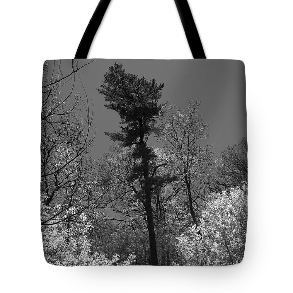 Pine Tree Tote Bag featuring the photograph Pineing Away by Randy Oberg