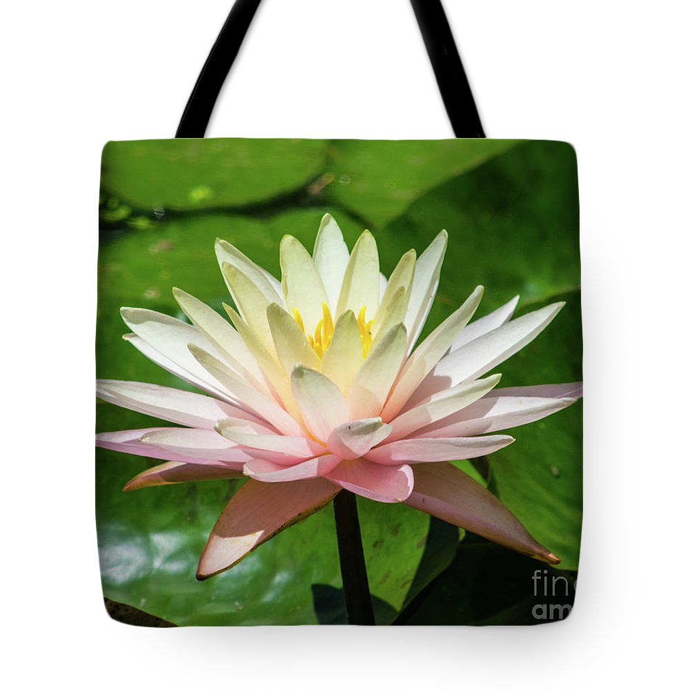 Water Tote Bag featuring the photograph Pink And White Water Lily by Robert Edgar