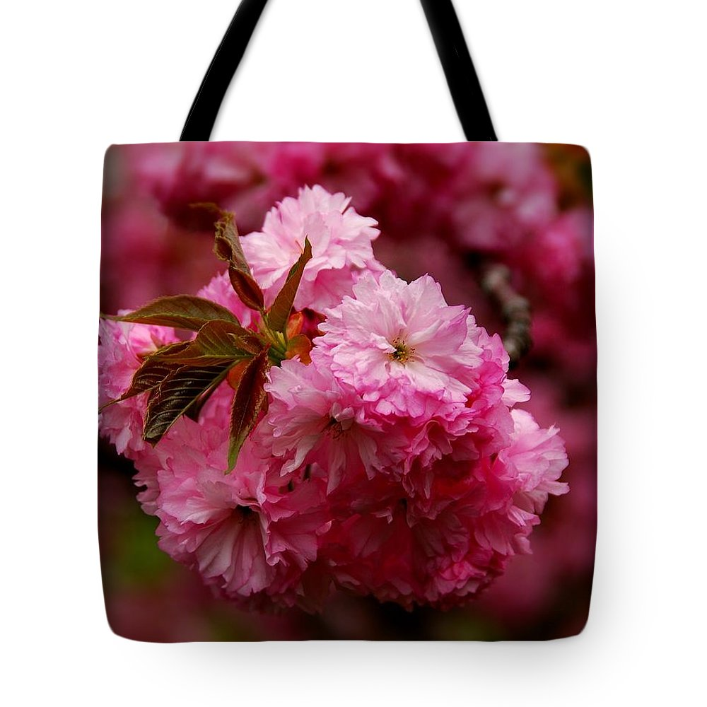 Cherry Blossom Trees Tote Bag featuring the photograph Pink Blooms by Angie Tirado