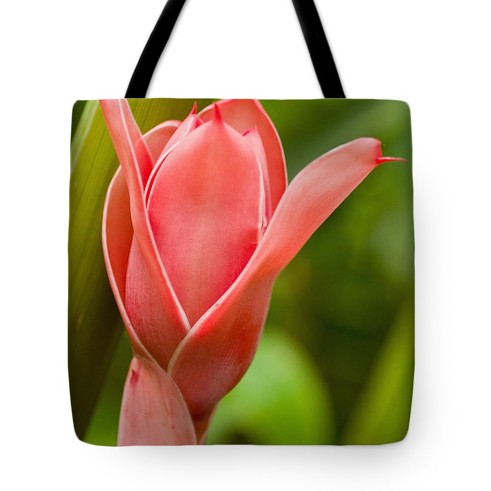 Afternoon Tote Bag featuring the photograph Pink Blossoming Flower by Tomas del Amo - Printscapes