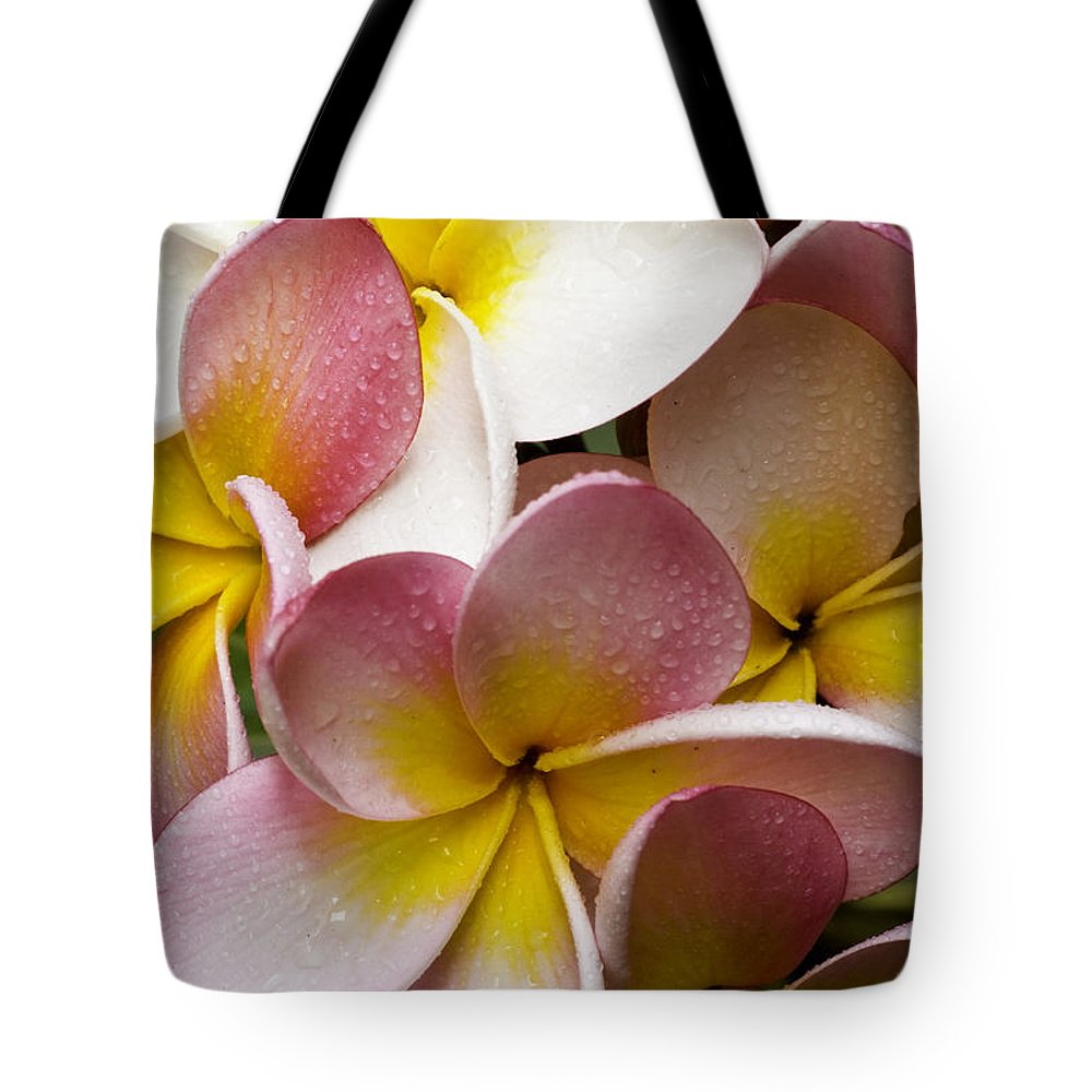 Pink Frangipani Tote Bag featuring the photograph Pink frangipani by Sheila Smart Fine Art Photography