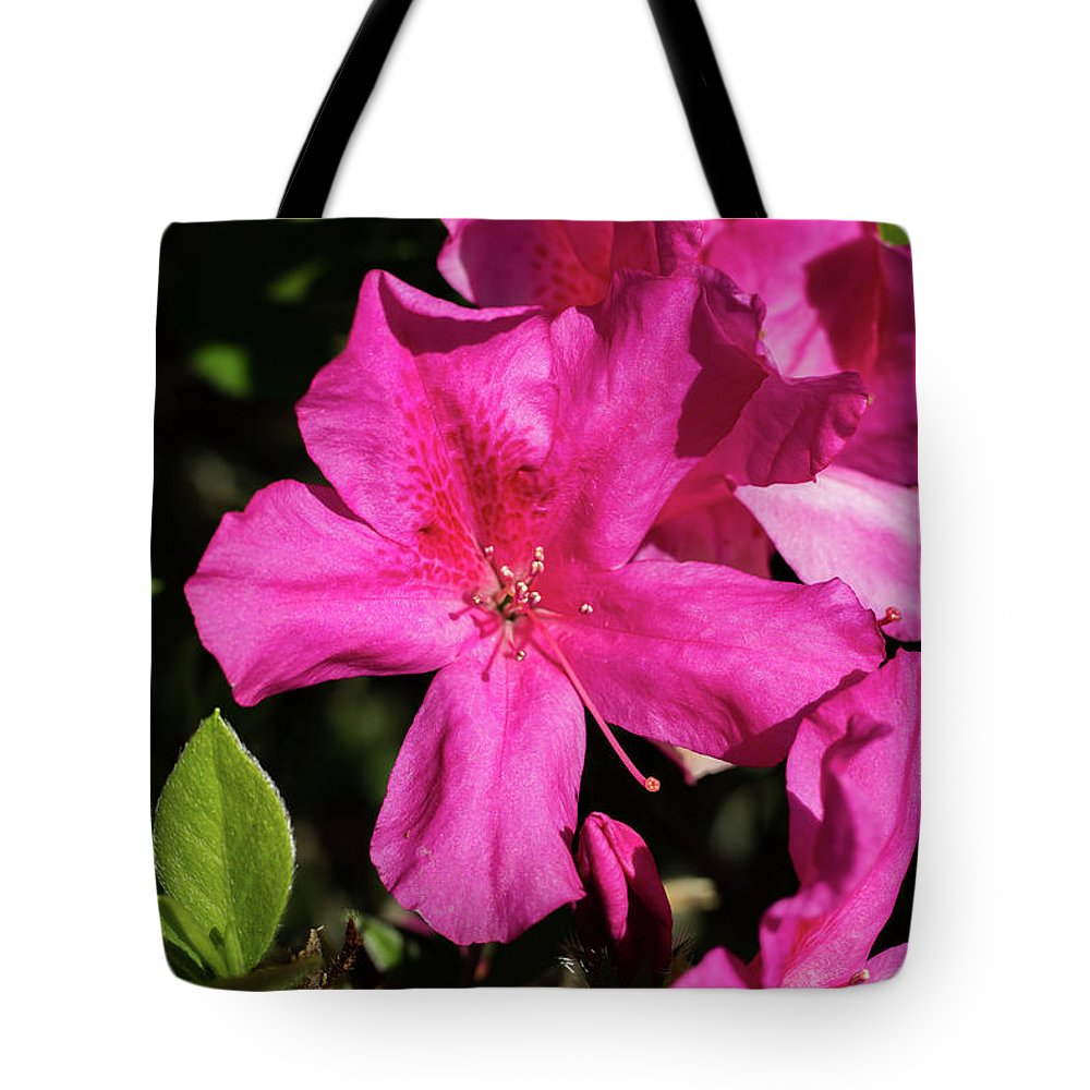 Lily Tote Bag featuring the photograph Pink Lilies Blooming by By Way of Karma