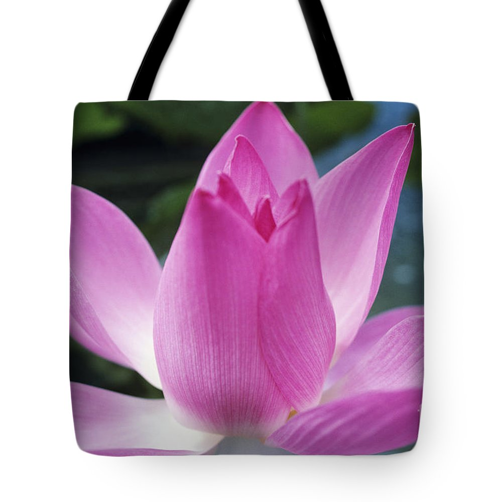 Beautiful Tote Bag featuring the photograph Pink Lotus by Larry Dale Gordon - Printscapes