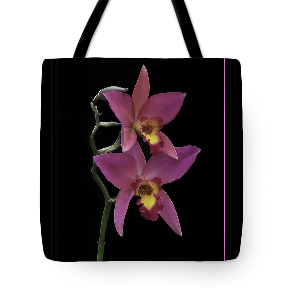 Orchid Tote Bag featuring the photograph Pink Orchids by Darleen Stry
