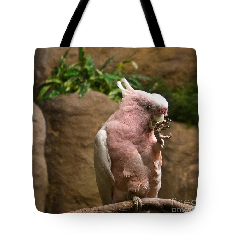 Pink Tote Bag featuring the photograph Pink Parrot Nibbling Foot 2 by Douglas Barnett
