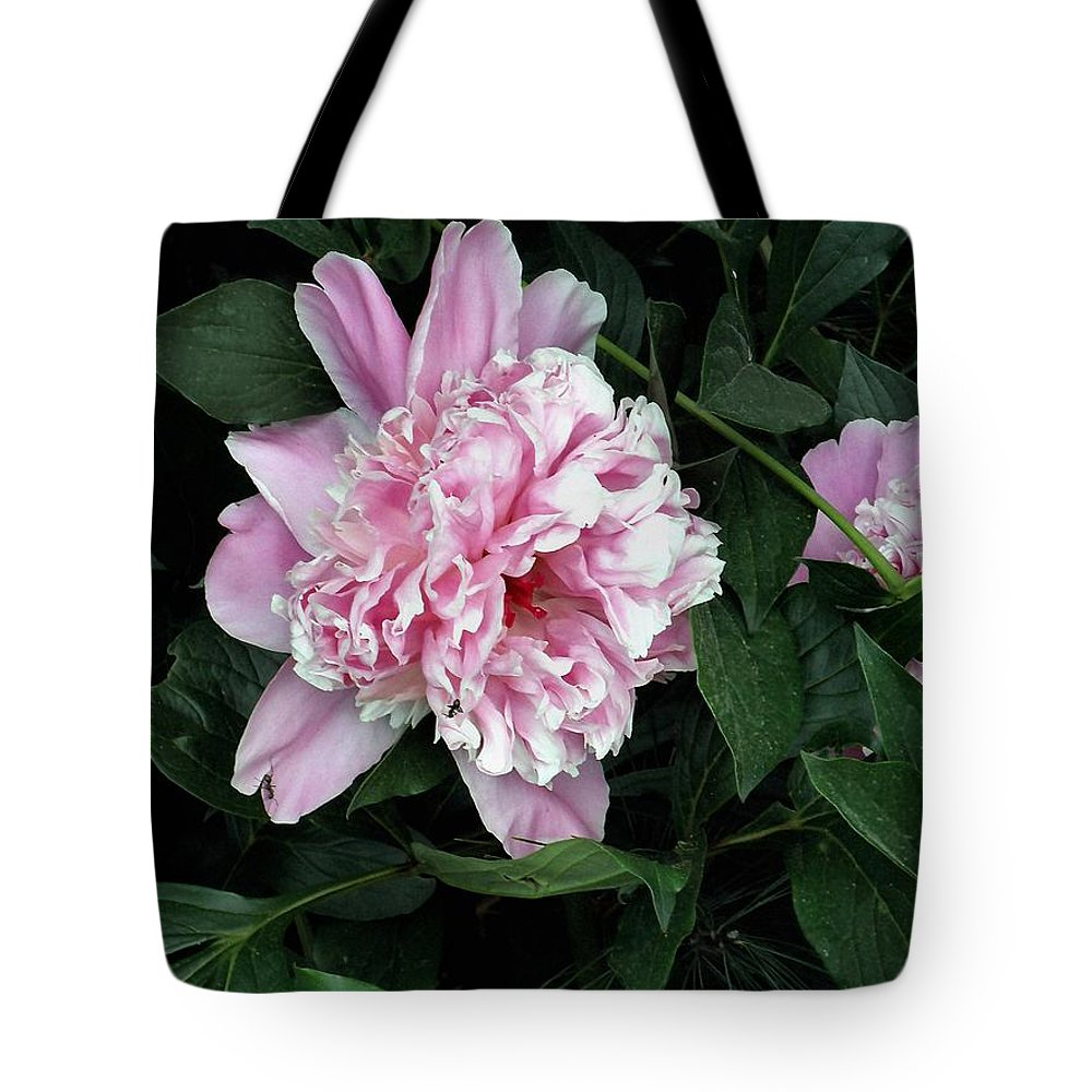 Peony Tote Bag featuring the photograph Pink Peone by T Cook
