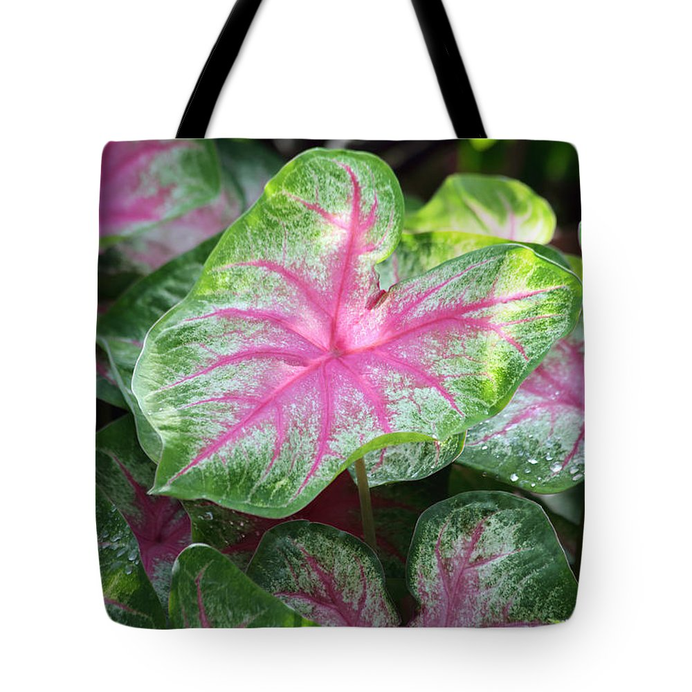 Dew Tote Bag featuring the photograph Pink Plants by Inho Kang