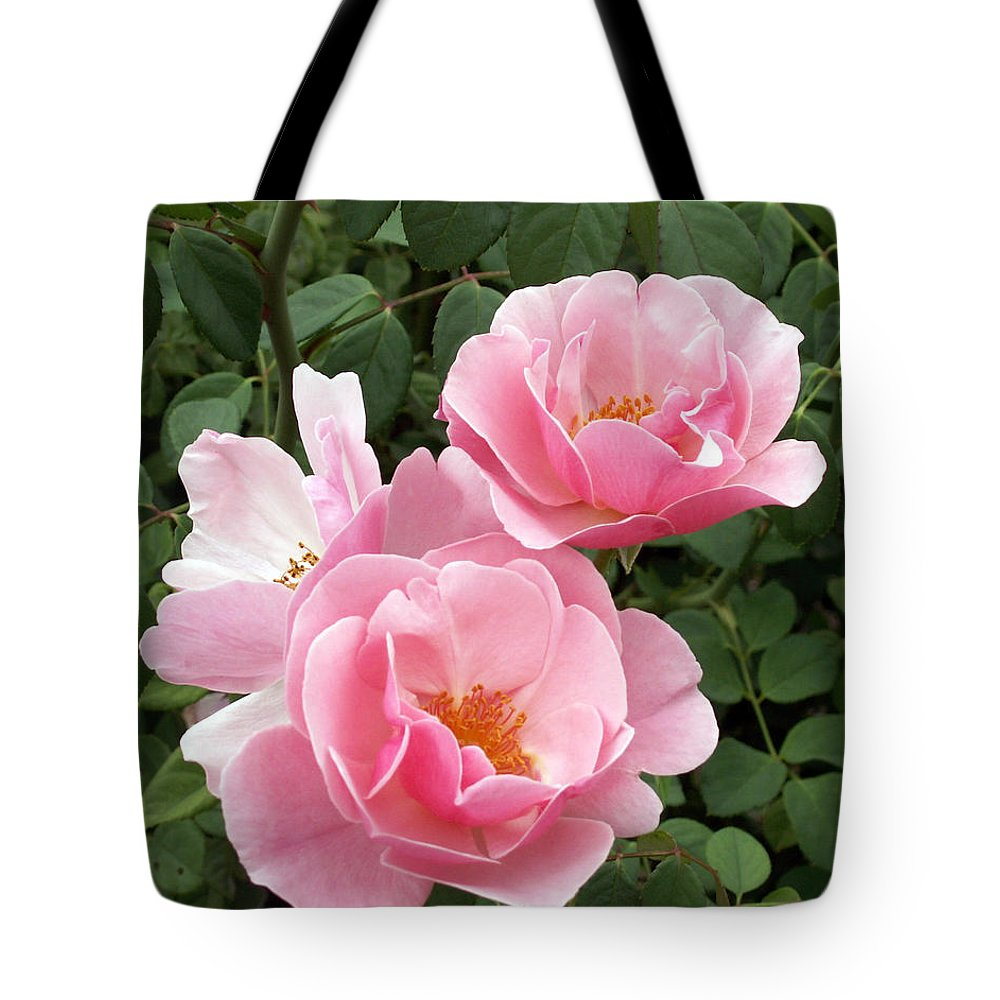 Roses Tote Bag featuring the photograph Pink Roses 1 by Amy Fose