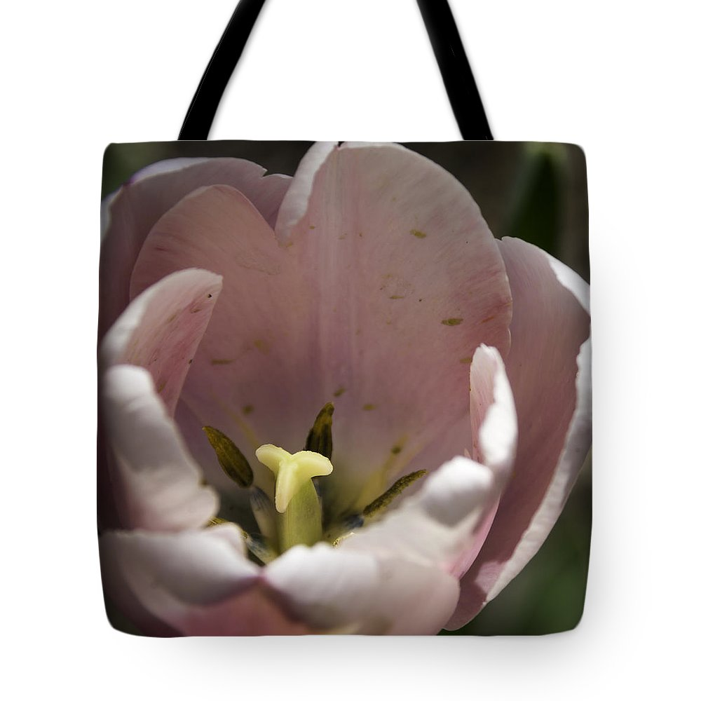 Flowers Tote Bag featuring the photograph Pink Tulip Center Squared by Teresa Mucha
