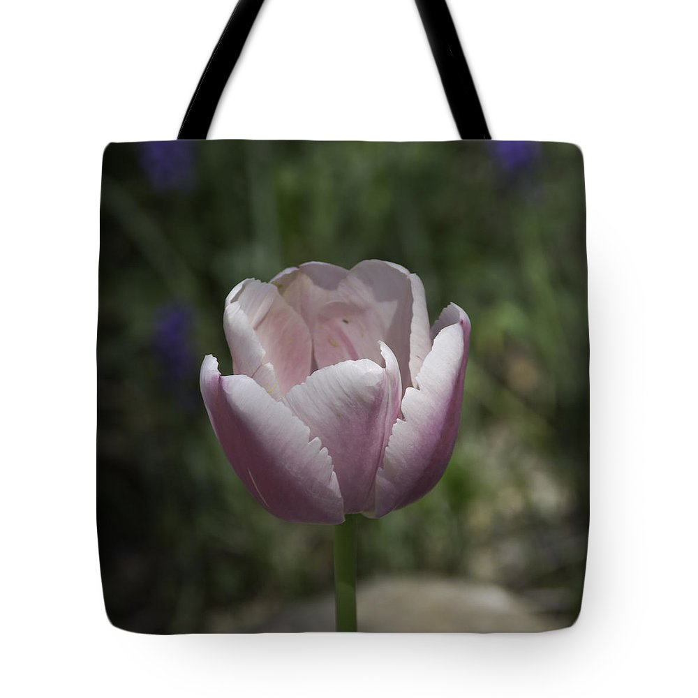 Flowers Tote Bag featuring the photograph Pink Tulip Squared by Teresa Mucha