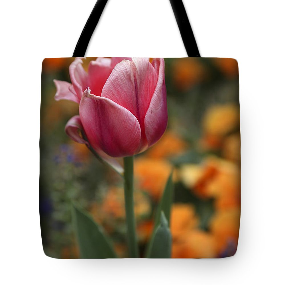 Tulip Tote Bag featuring the photograph Pink Tulip by Tony Colvin