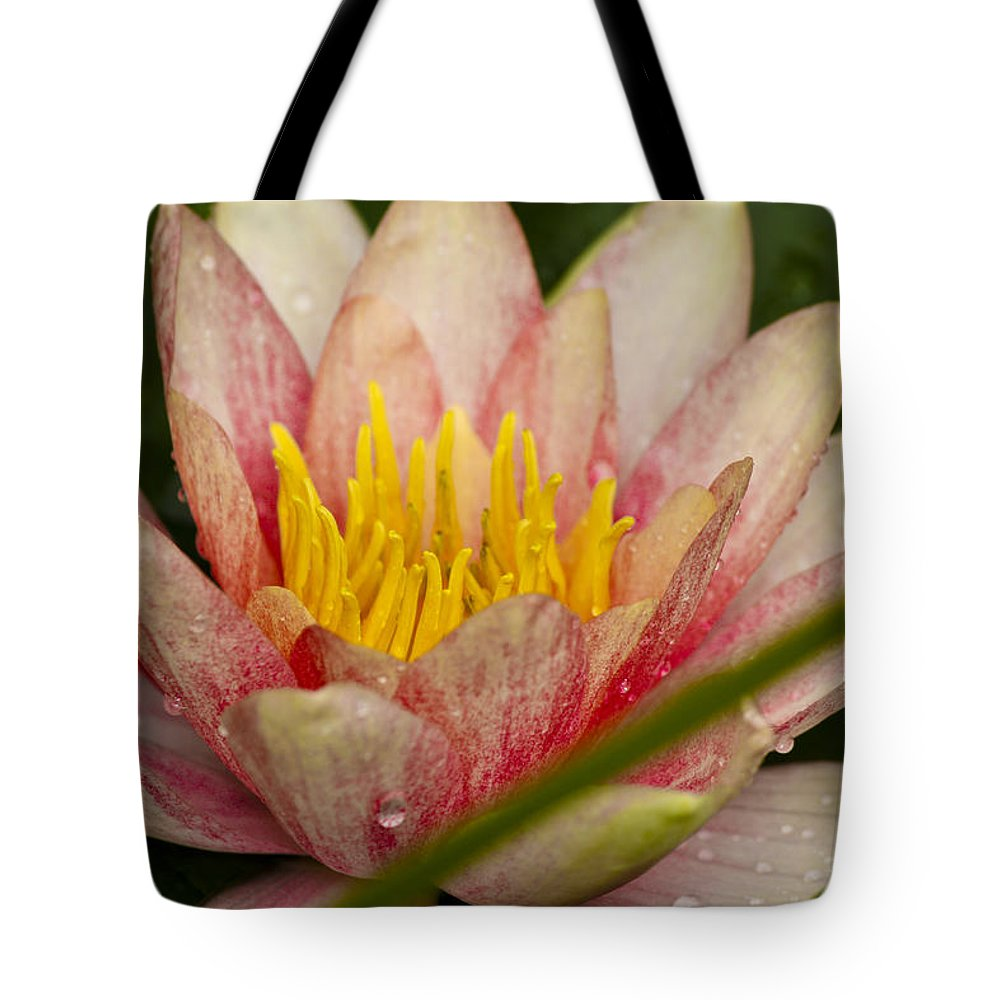 J Paul Getty Tote Bag featuring the photograph Pink Water Lilly by Teresa Mucha