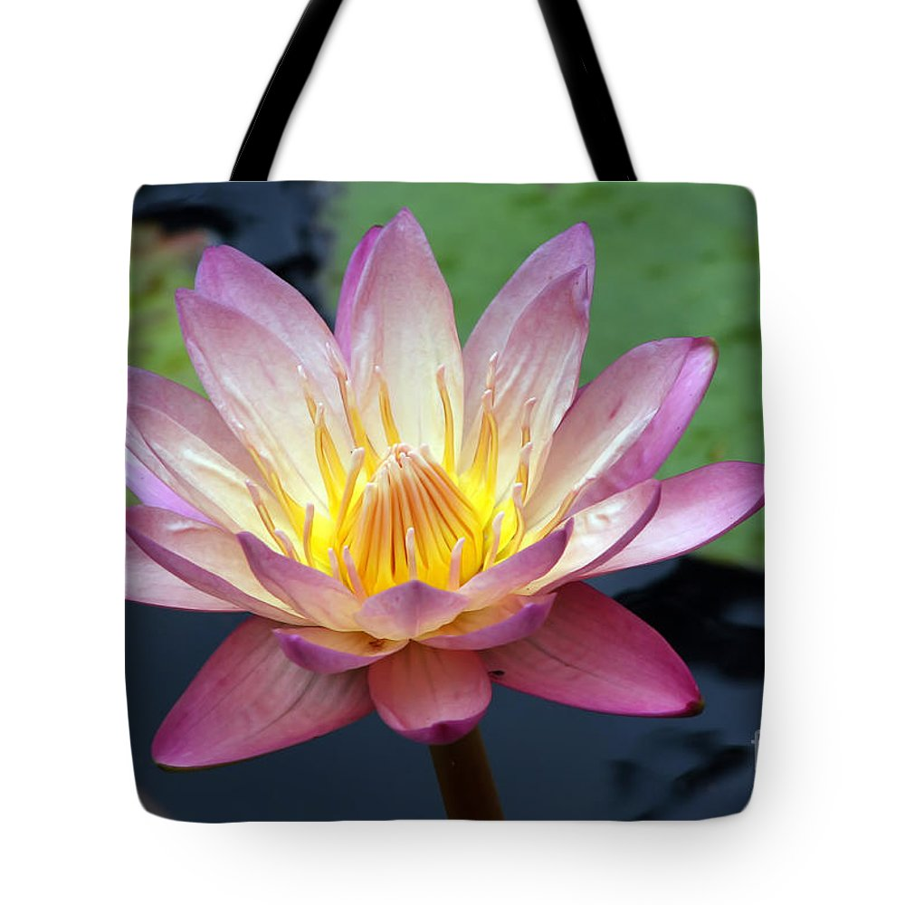 Wildflower Tote Bag featuring the photograph Pink Water Lily by Teresa Zieba