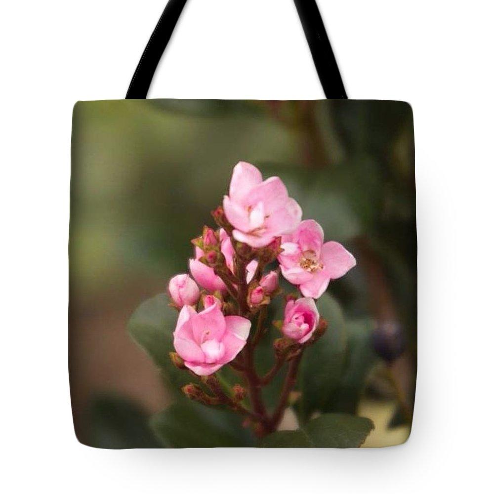 Pink Tote Bag featuring the photograph Pittosporum Pink 2 by Marta Robin Gaughen