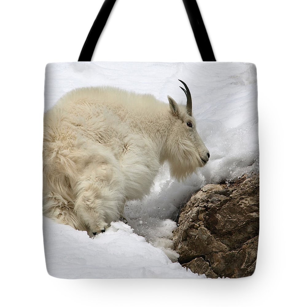 Animals Tote Bag featuring the photograph Planning Next Step by DeeLon Merritt