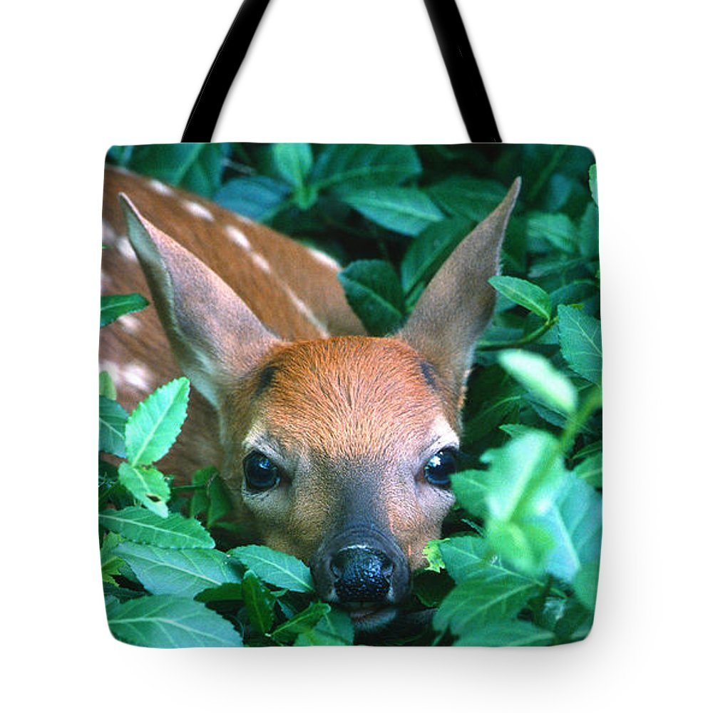 Fawn Tote Bag featuring the photograph Playing Peekaboo by Sandra Bronstein