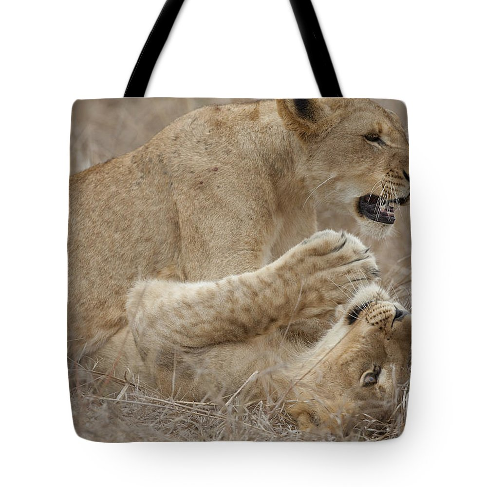 Lions Tote Bag featuring the photograph Playtime by Leigh Lofgren