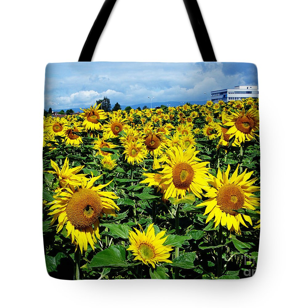 Sunflowers Tote Bag featuring the photograph Pleasant Warmth by Jeff Barrett