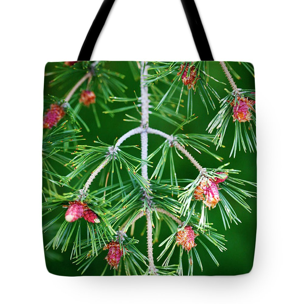 Plentiful Tote Bag featuring the photograph Plentiful Pine by Marilyn Hunt