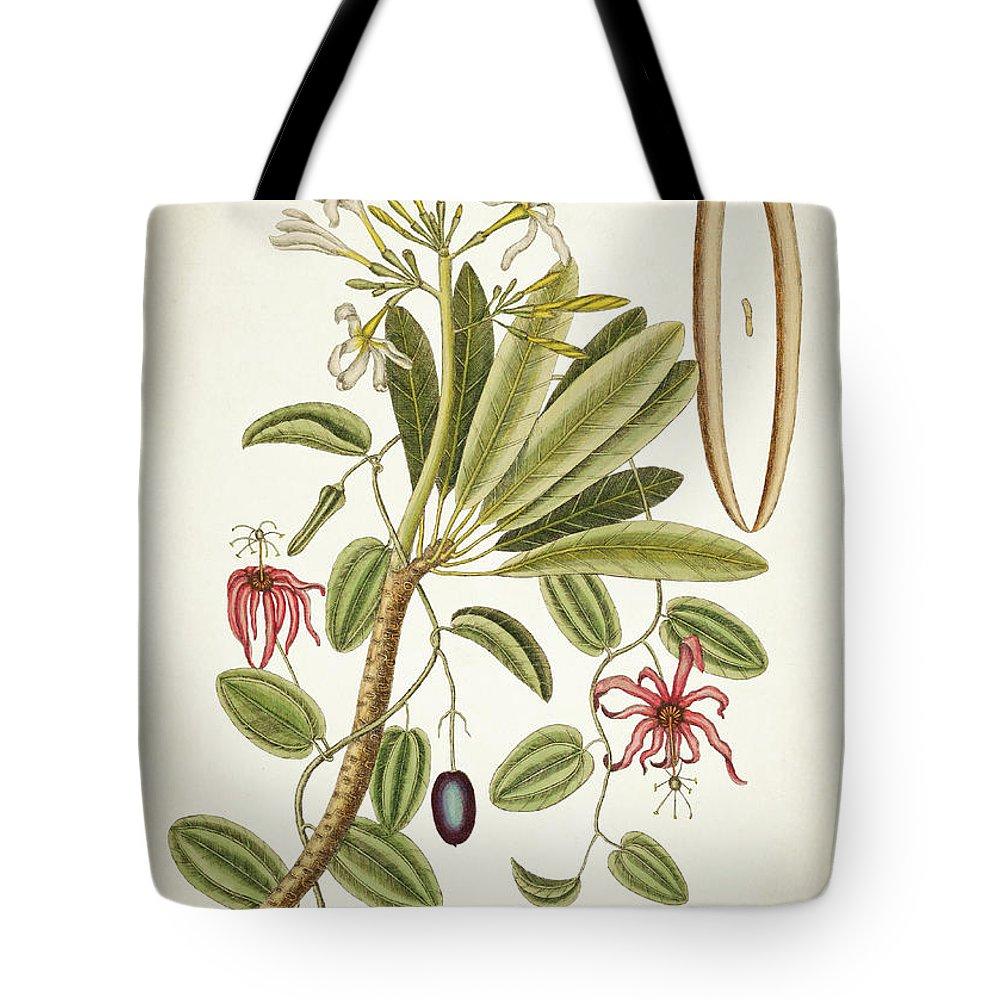 Plumeria Tote Bag featuring the digital art Plumeria Obtusa Botantical Print by Aged Pixel