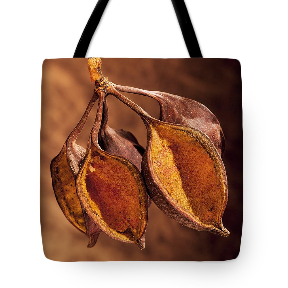 Seed Pods Tote Bag featuring the photograph Pods by Kelley King