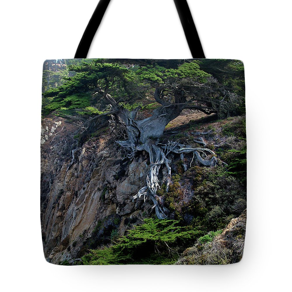 Landscape Tote Bag featuring the photograph Point Lobos Veteran Cypress Tree by Charlene Mitchell