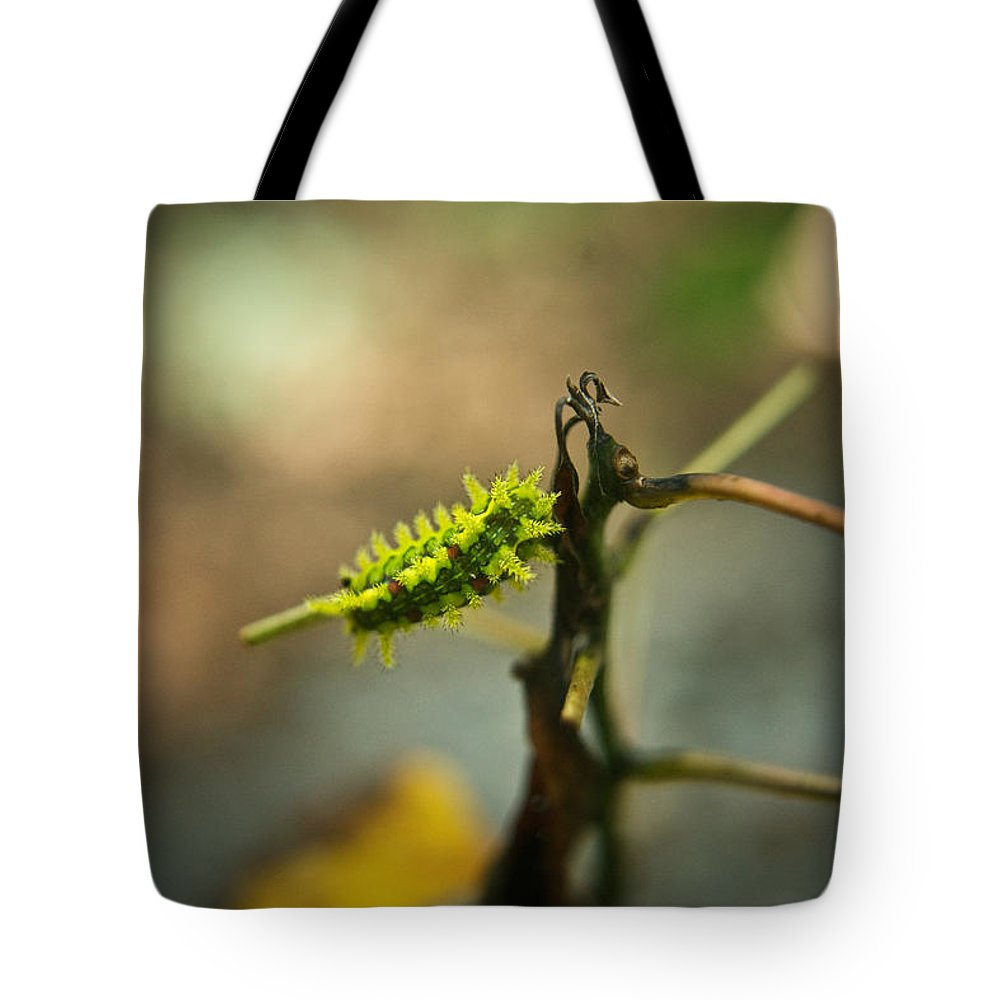 Cove Tote Bag featuring the photograph Poisonous Insect Larva by Douglas Barnett
