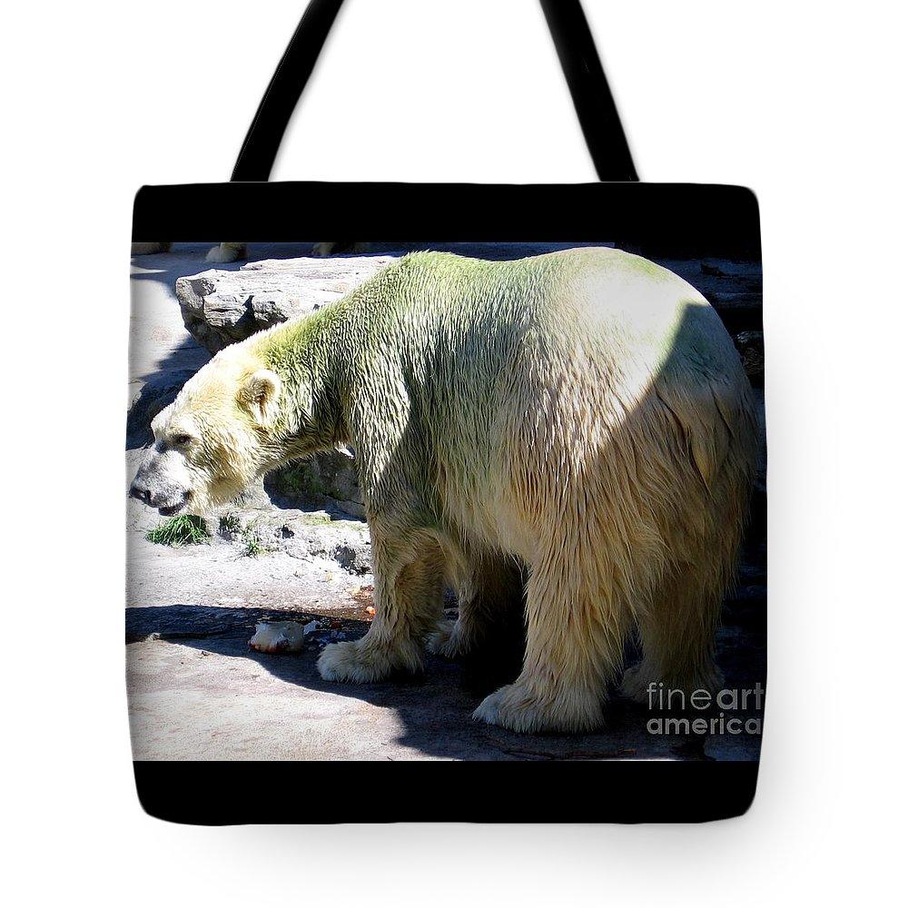 Polar Bear Tote Bag featuring the photograph Polar Bear 2 by Rose Santuci-Sofranko