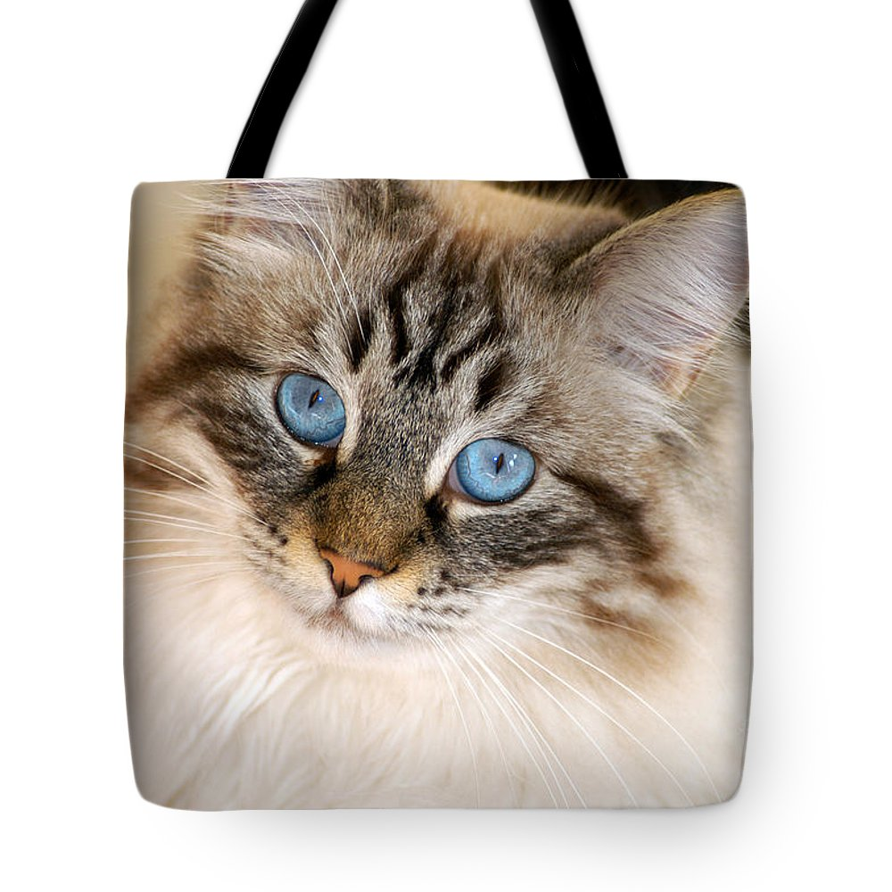 Clay Tote Bag featuring the photograph Polly by Clayton Bruster
