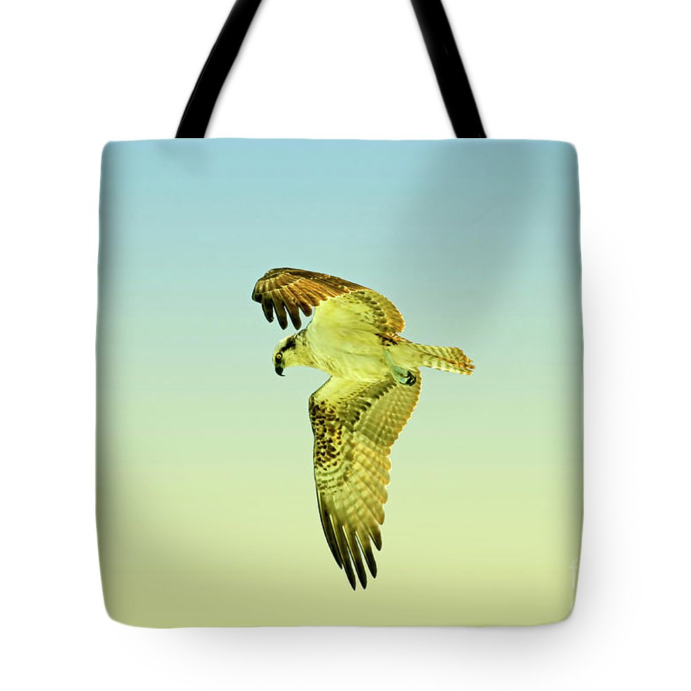 Osprey Tote Bag featuring the photograph Ponce Osprey 4 by Deborah Benoit