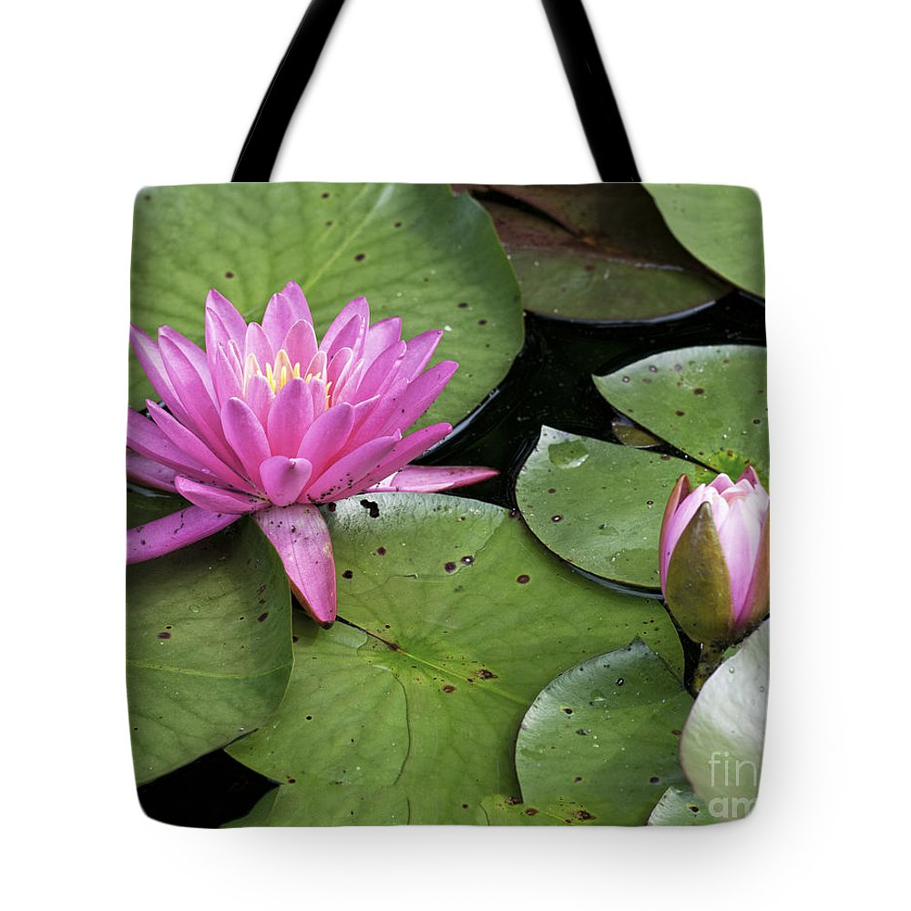 Lily Tote Bag featuring the photograph Pond Lily And Bud by Timothy Flanigan