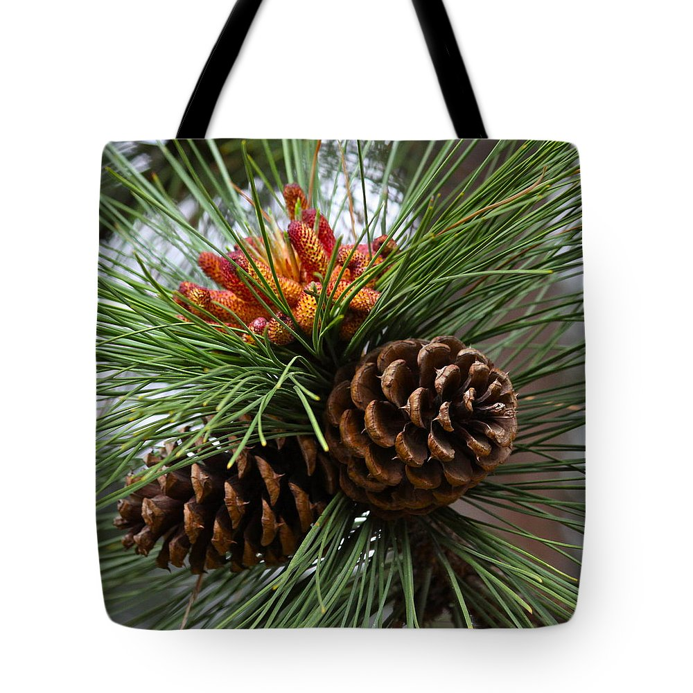 Tree Tote Bag featuring the photograph Ponderosa Pine Cones by Karon Melillo DeVega