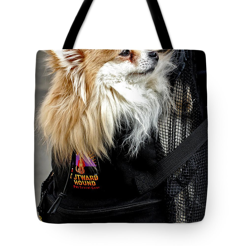 Dog Tote Bag featuring the photograph Pooch In The Pouch by Madeline Ellis