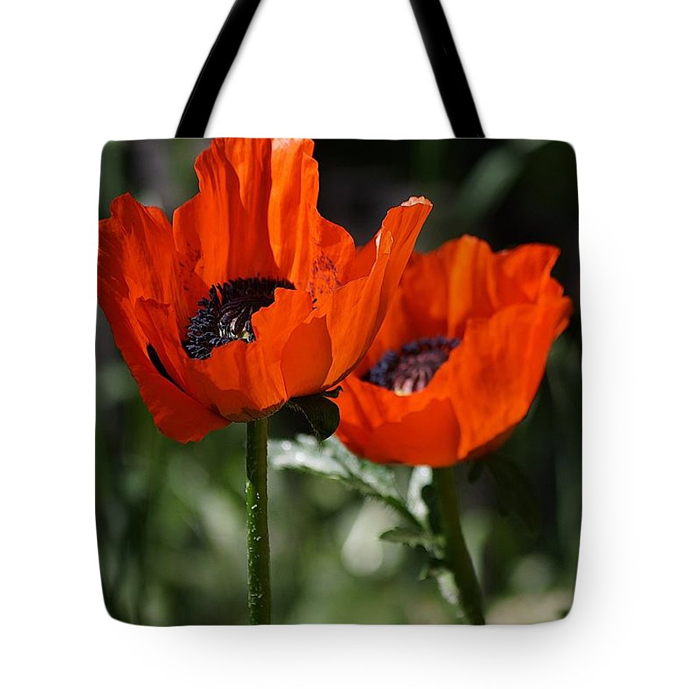Poppies Tote Bag featuring the photograph Poppy Pair by Tracey Vivar