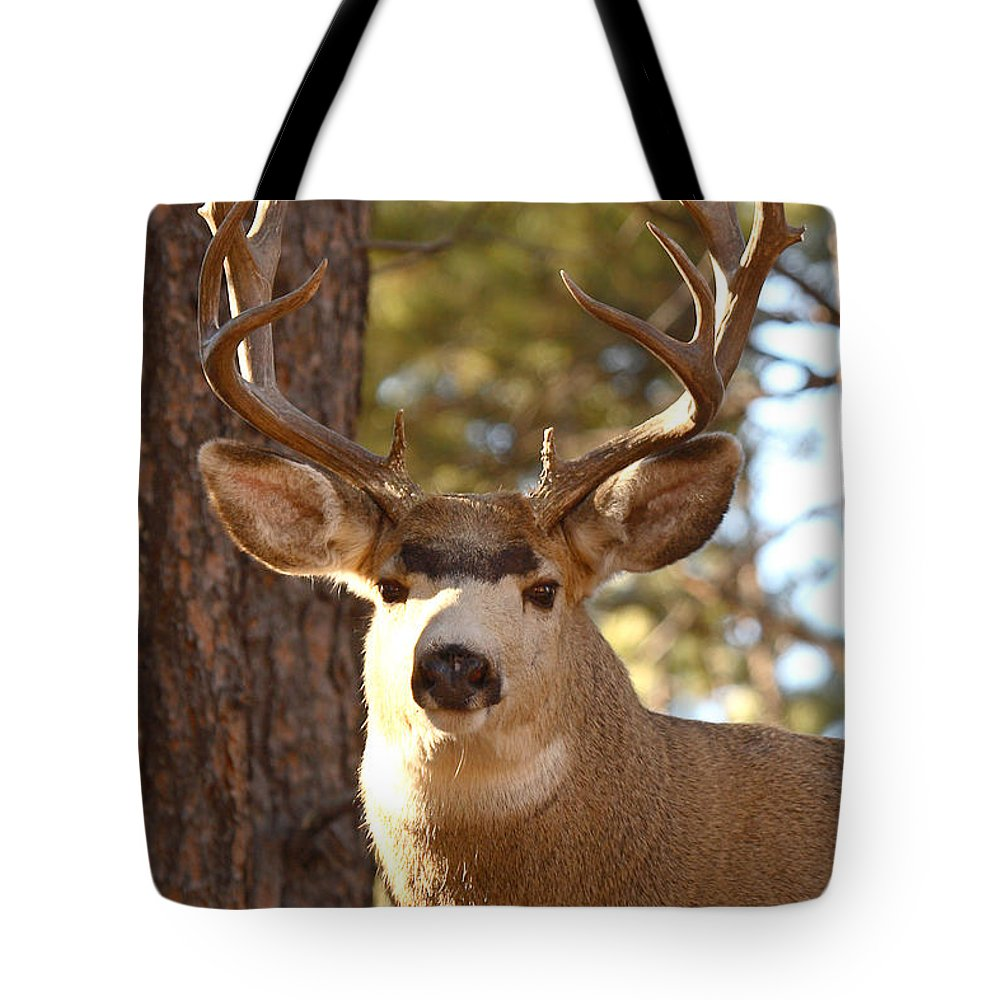 Buck Tote Bag featuring the photograph Portrait Of A 15-point Buck by Max Allen