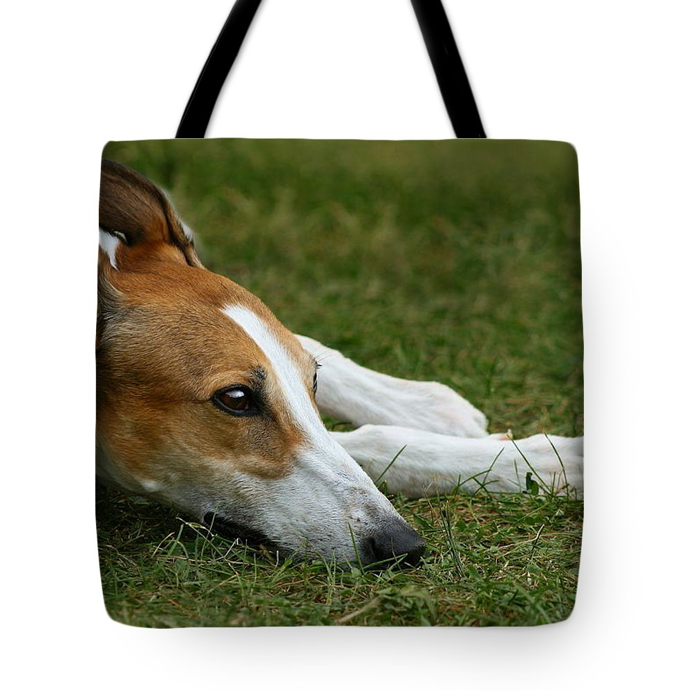 Editorial Tote Bag featuring the photograph Portrait Of A Greyhound - Soulful by Angela Rath