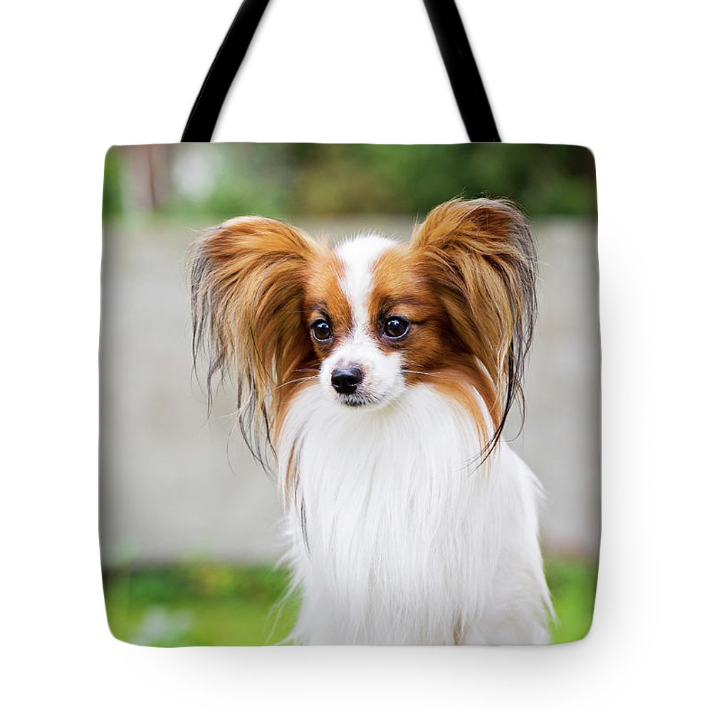 Portrait Of A Papillon Dog Tote Bag For Sale By Anna Maloverjan