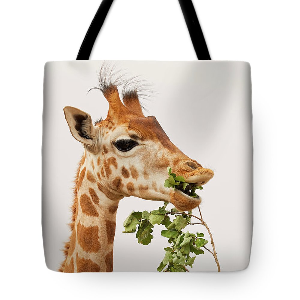 Africa Tote Bag featuring the photograph Portrait Of A Rothschild Giraffe IIi by Nick Biemans