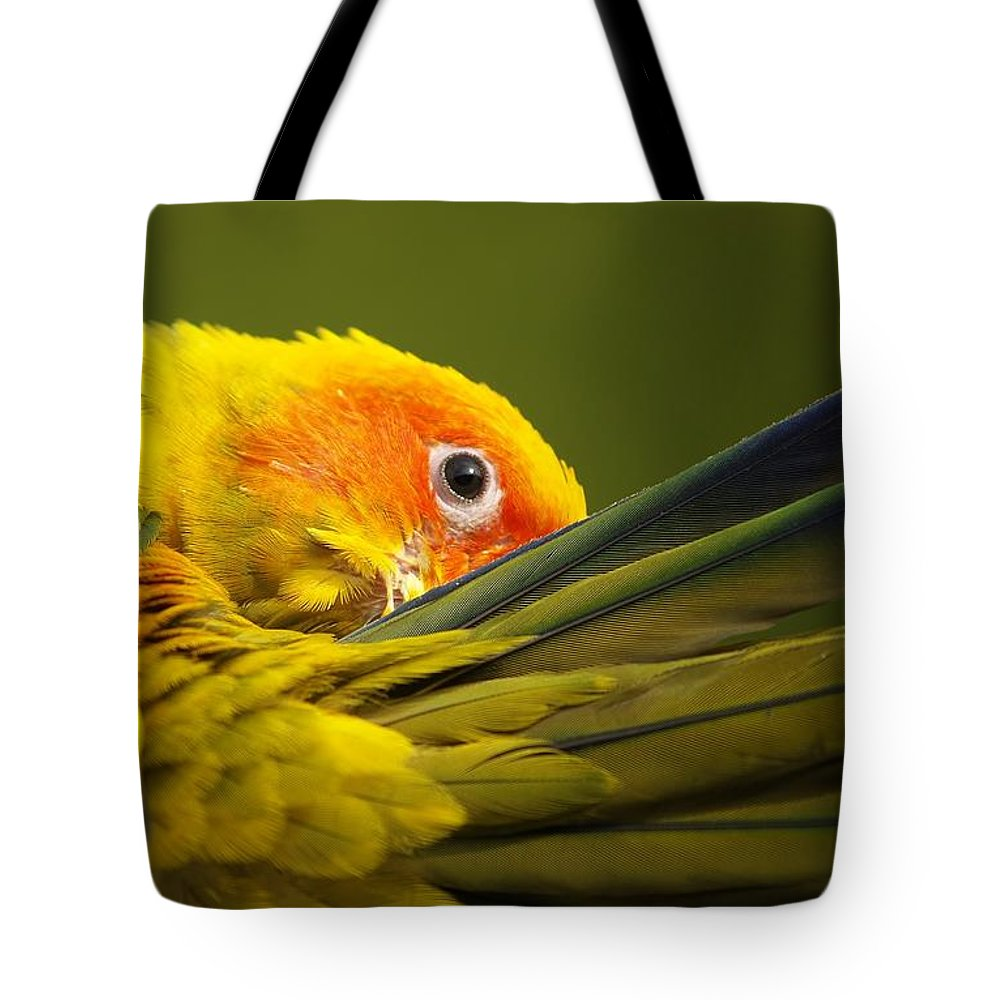 Bird Tote Bag featuring the photograph Portrait Of A Sun Conure by Denise Irving