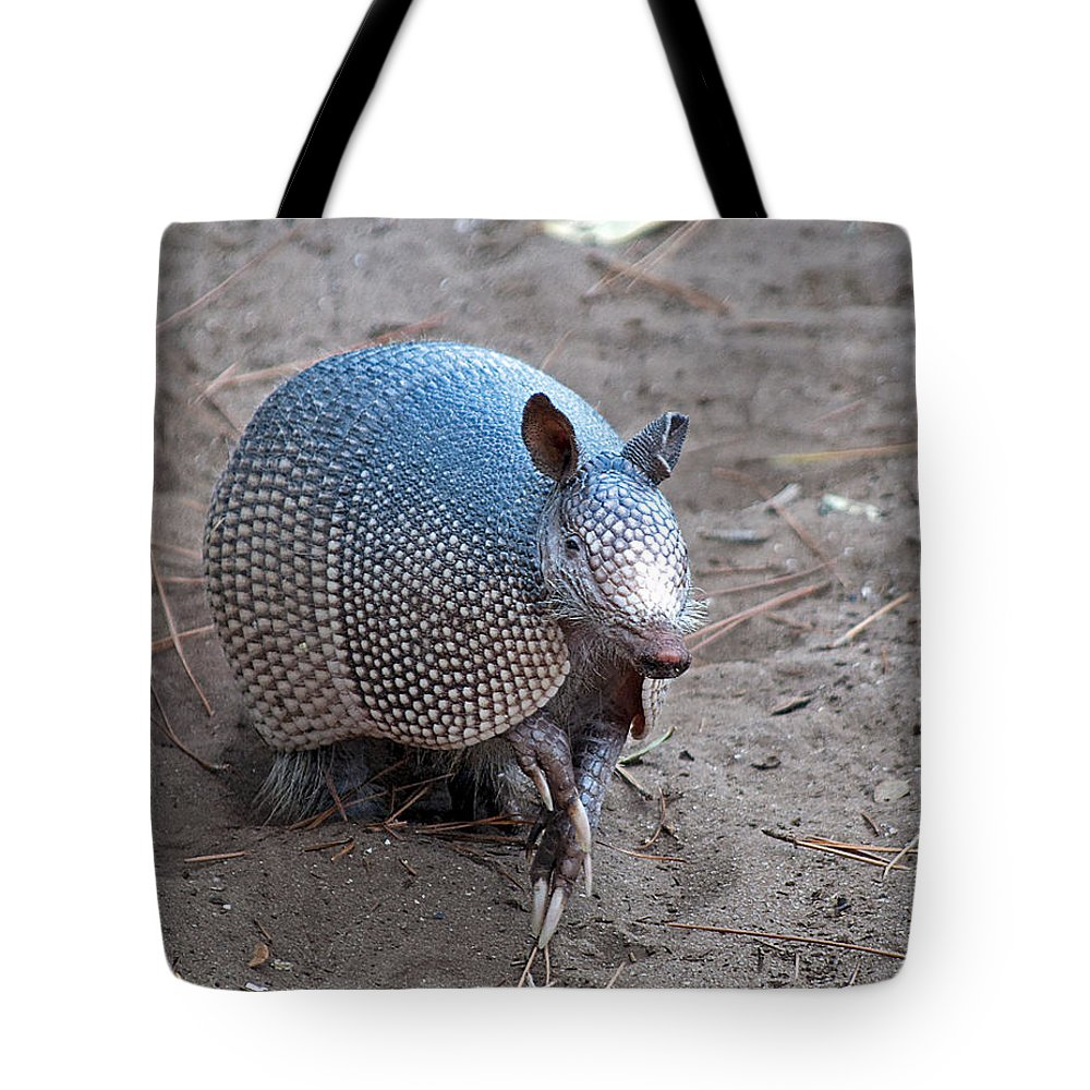 Armadillo Tote Bag featuring the photograph Posing Armadillo by Kenneth Albin