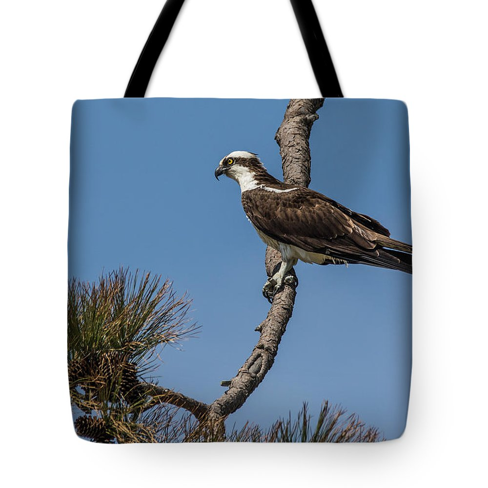 Osprey Tote Bag featuring the photograph Posing Osprey by Jeff Carlson