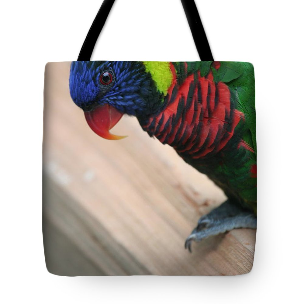 Lorikeet Tote Bag featuring the photograph Post Position by Laddie Halupa
