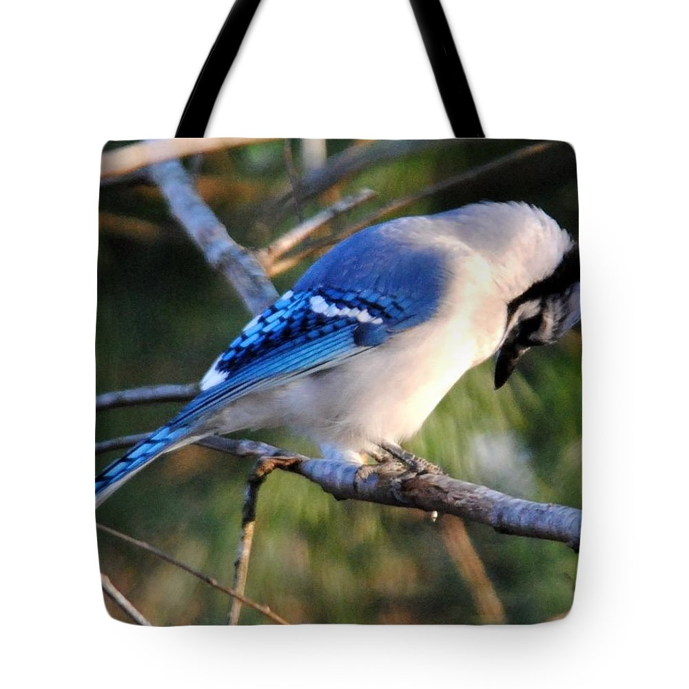 Blue Jay Tote Bag featuring the photograph Praying Blue Jay by Jai Johnson