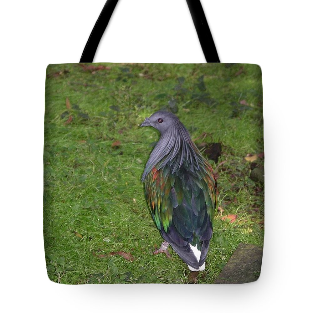 Bird Tote Bag featuring the photograph Pretty Bird by Rich Bodane