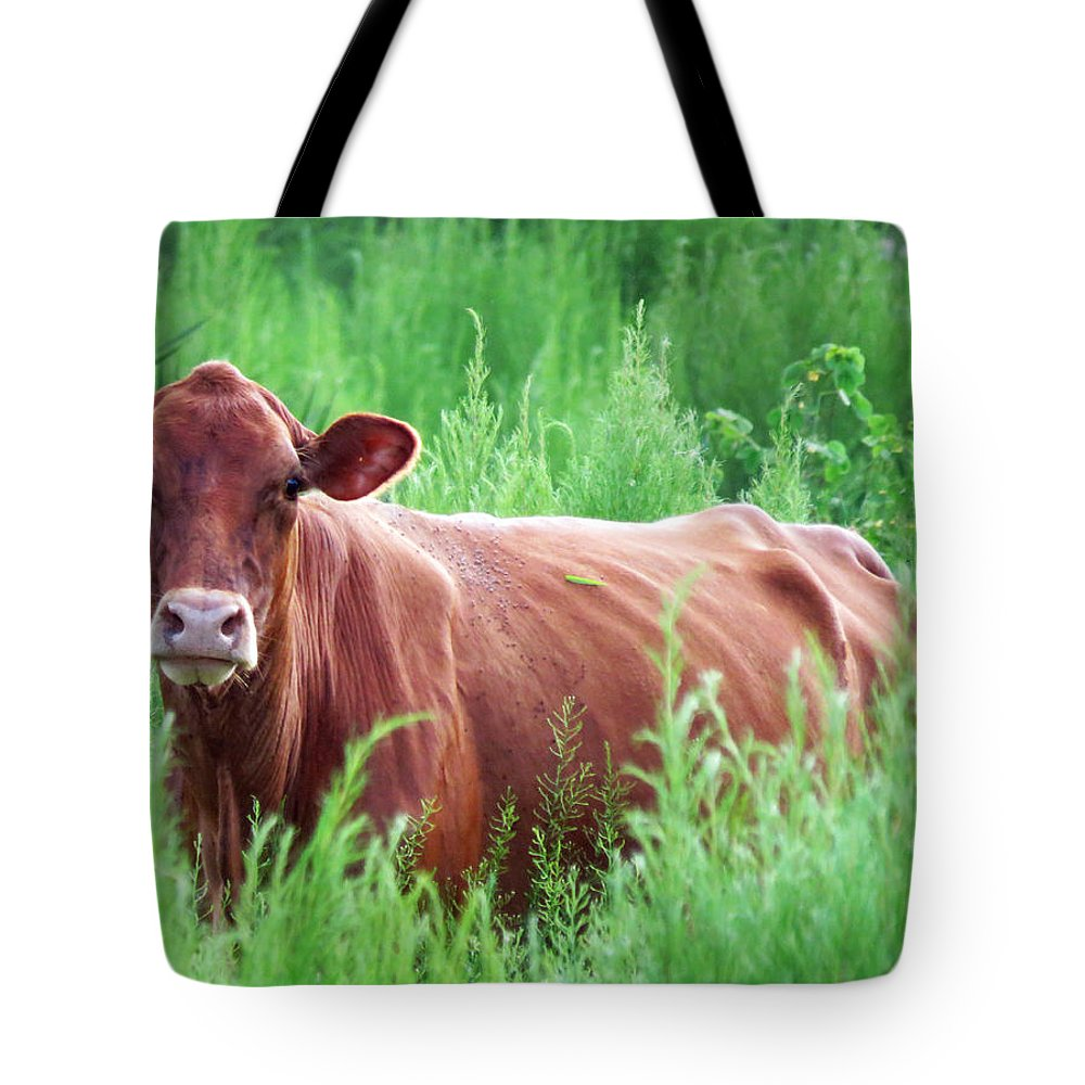 Animal Tote Bag featuring the photograph Pretty Brown Cow by Mario Carta